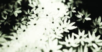 pochette album sans texte, fond avec le fleurs